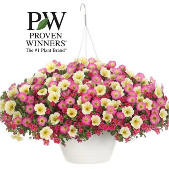 "Image of 10"" hanging basket potted annuals for spring fundraising"