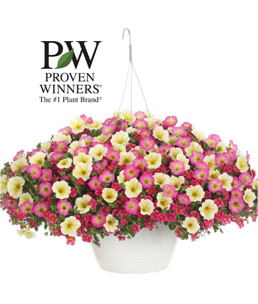 """Image of 10"""" hanging basket potted annuals for spring fundraising"""