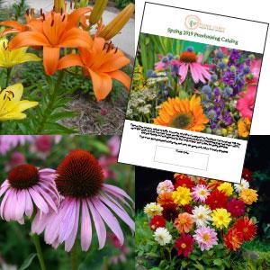 Spring Catalog Image