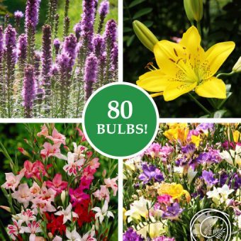 Image of Summer Sun Garden Mix Bulbs Flowers