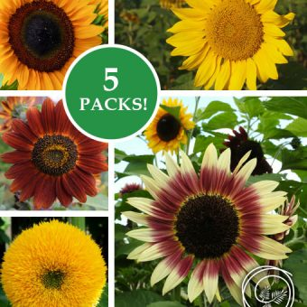 Image of Sunflower Garden Seed Kit