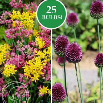 Image of Allium Rock Garden Mix Flower Bulbs