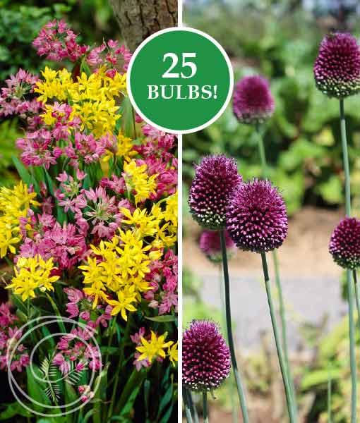 Image of Allium Rock Garden Mix Flower Bulbs