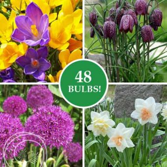 Image of Spring Classics Collection Flower Bulbs