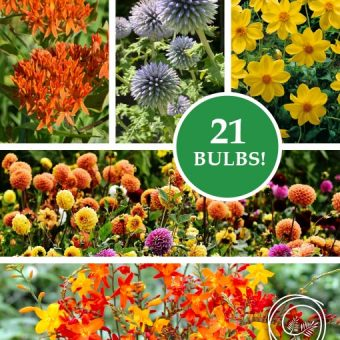 Image of Butterfly Garden Collection flower bulbs