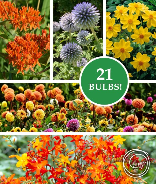 Image of Butterfly Garden Collection spring flower bulbs for fundraisers