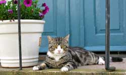 Container gardening in colder zones with cat